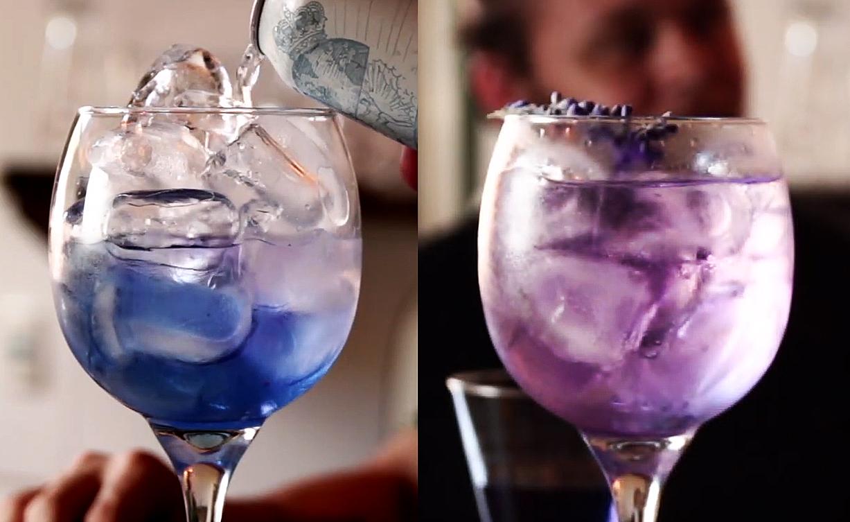 drink com feijão borboleta